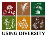 Using Diversity